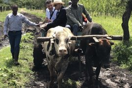 [Photos] Irish ambassador in Kenya rides ox cart to open school block